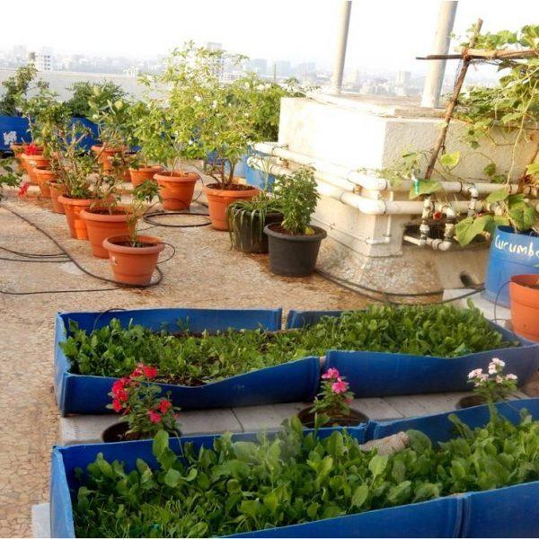 Compost utilization-Terrace garden
